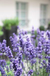 Jardin aromatique Blossom
