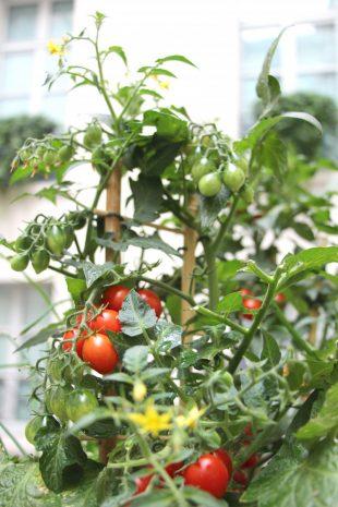 our-potager-garden