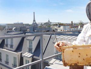 Les ruches du Sofitel Paris Le Faubourg