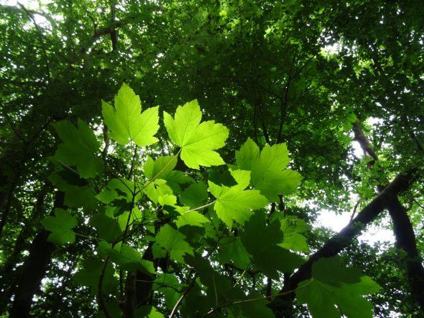 arbres-davenir