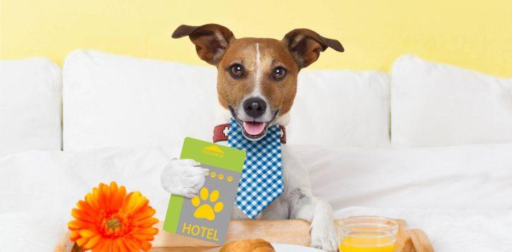 dog-hotel-policy2
